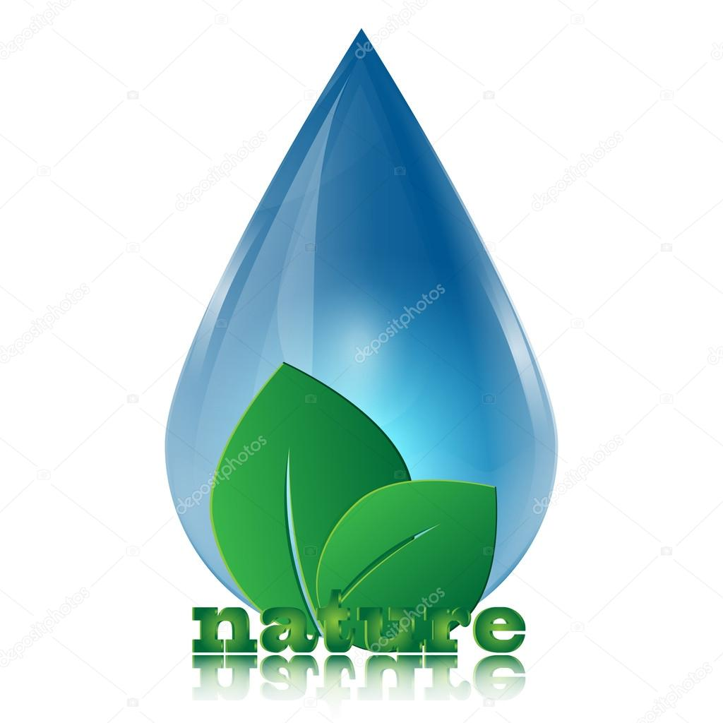 Water drop and green leaves isolated on white background