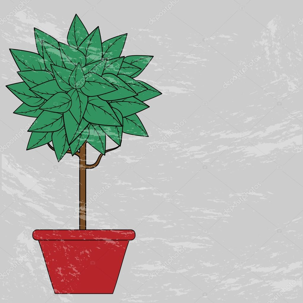 tree with green leaves in a red clay pot on a gray background