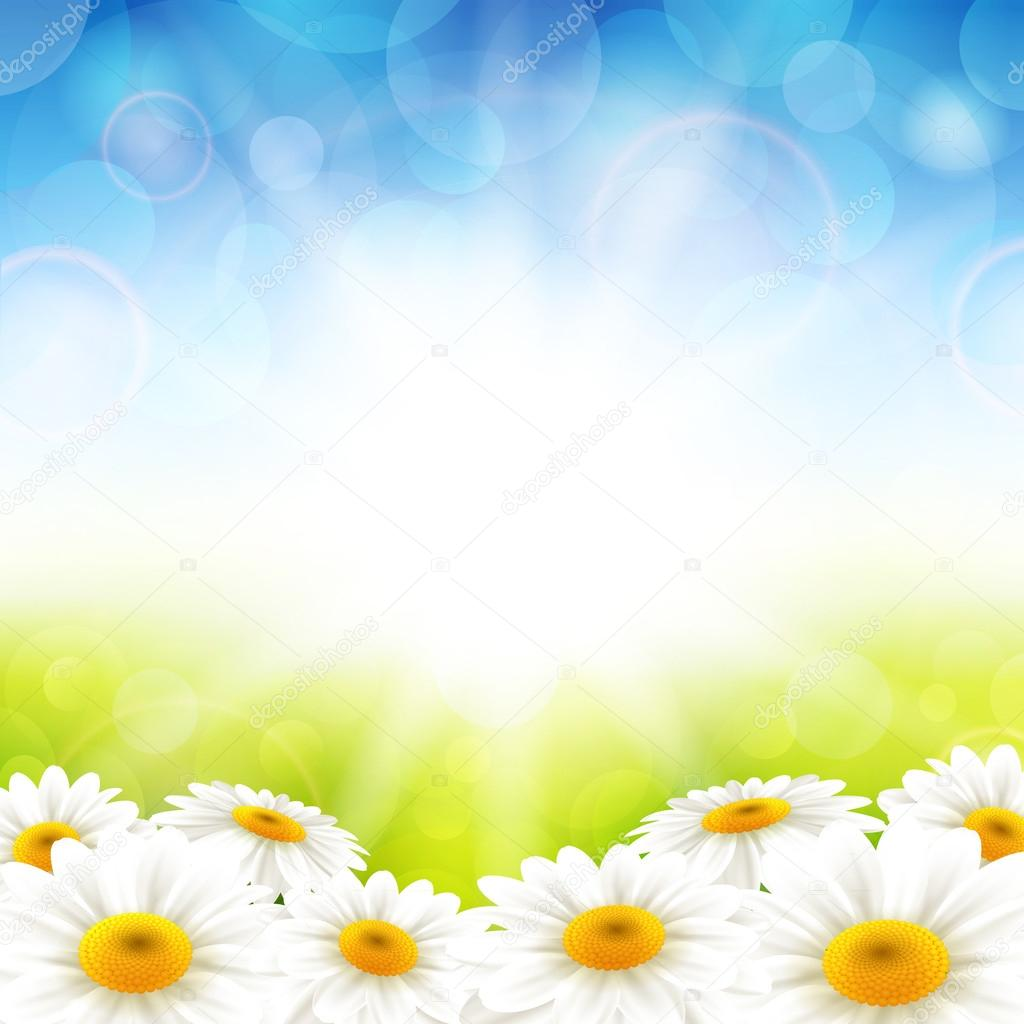 Flowers on the summer background