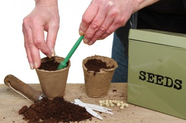 Hands planting seeds