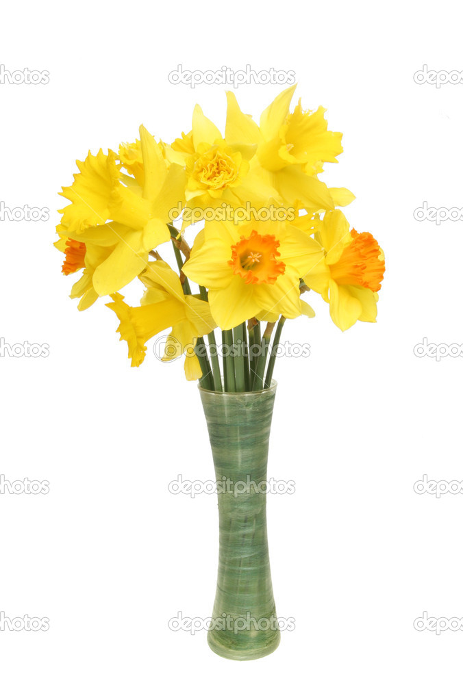 Daffodils In Vase Stock Photo Griffin024 16316459