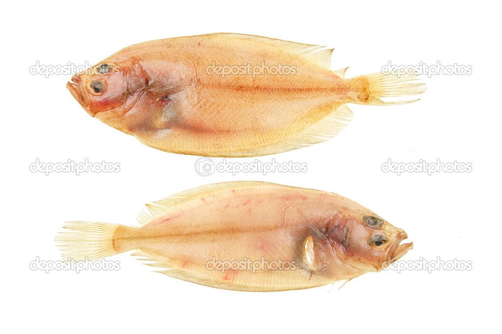 Due Pesce Piatto Unico Di Rombo Giallo Foto Stock Griffin024