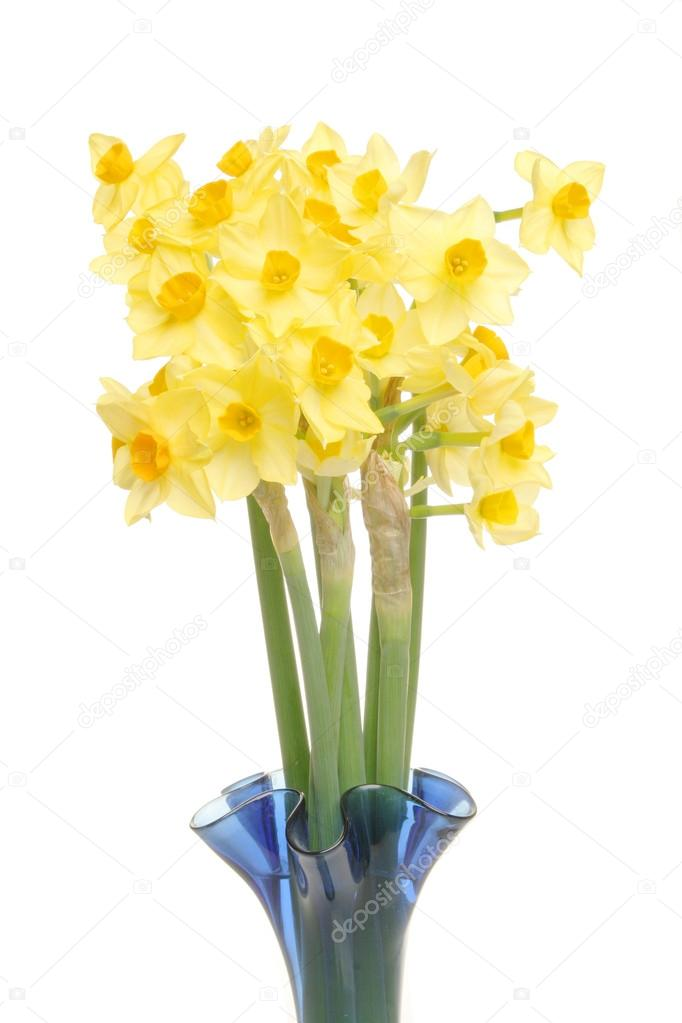 Daffodils In A Vase Stock Photo Griffin024 17357743