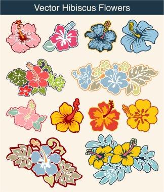 Vector hibiscus flowers
