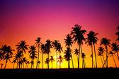 siluetu kokos stromu při západu slunce