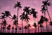 Fotografie siluetu kokosu