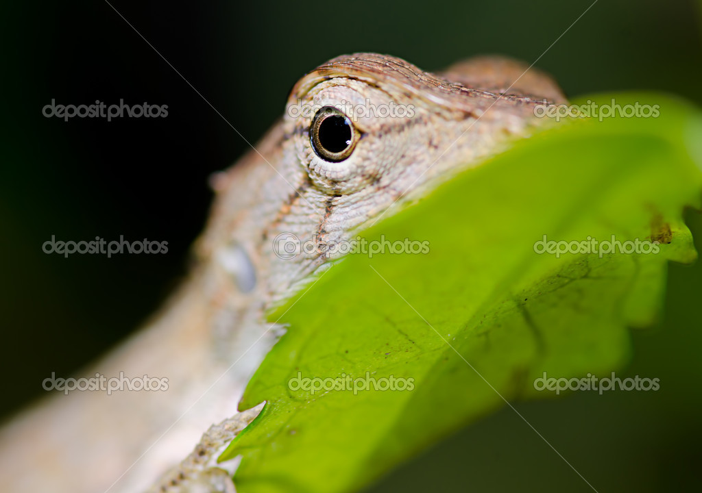 Close up lizard on green leaf