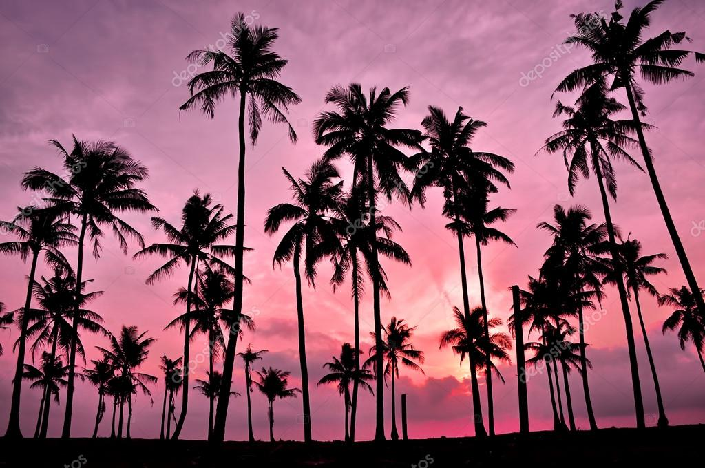 Silhouetted of coconut