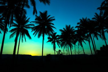 Palm trees silhouette with sunset