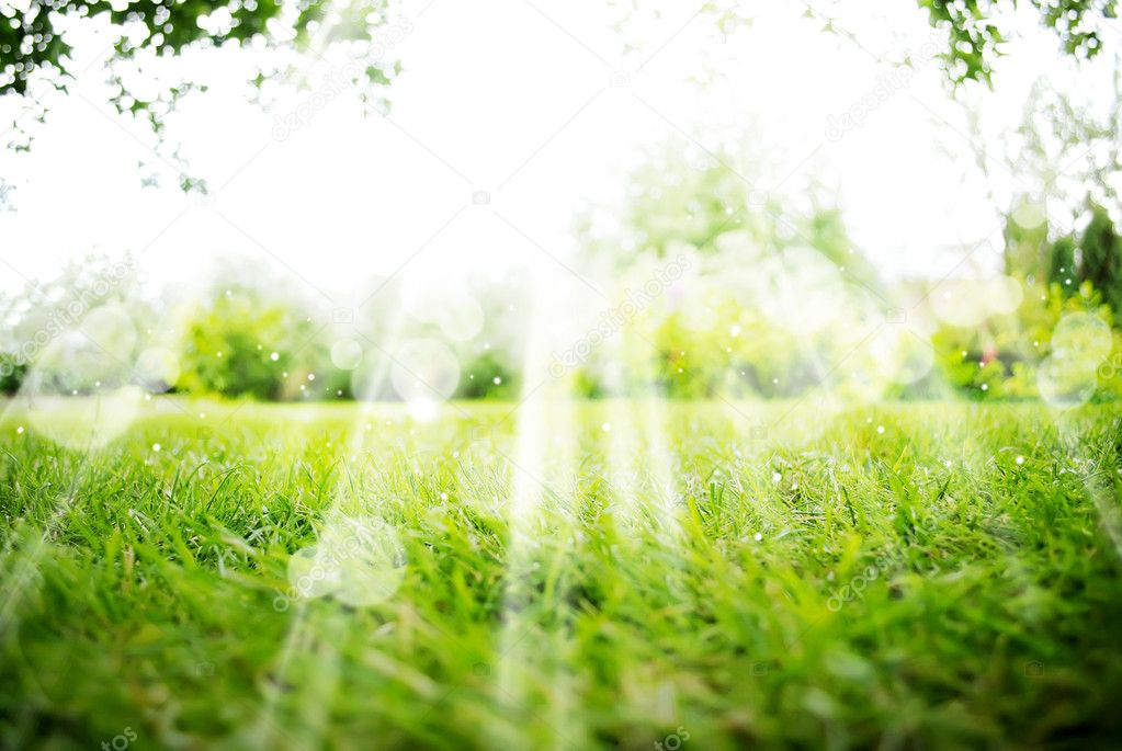 Green Landscape Background with Sunshine and Boke