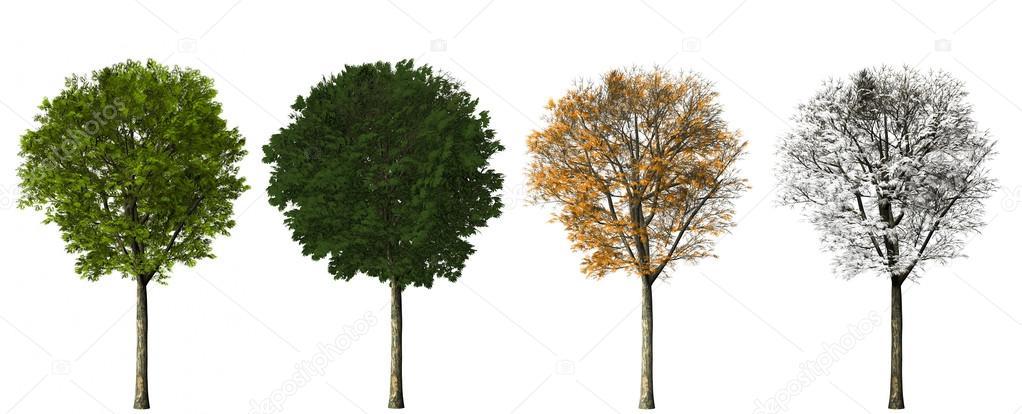 Tree - four seasons