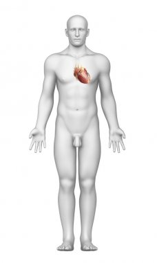 Heart interior view with male body stock vector