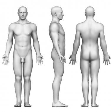 Male figure in anatomical position posterior,front, side view