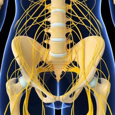 3d art illustration of Nervous system