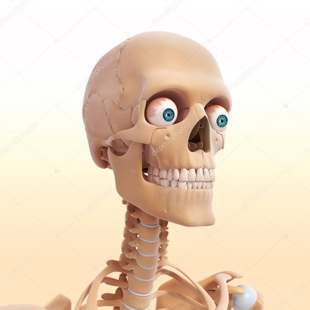 Human Skeleton Of Head With Eyes Teeth Stock Photo Pixologic