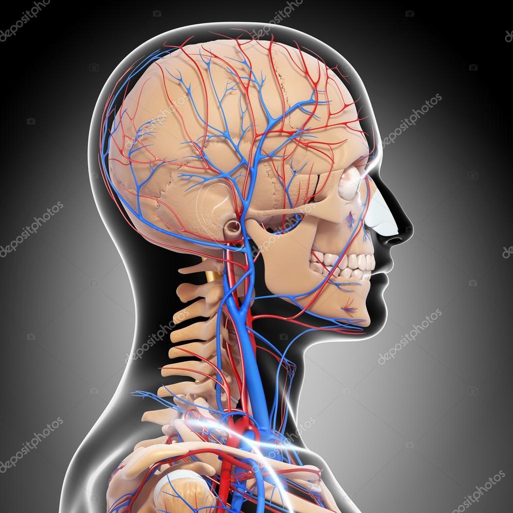 Как восстановить кровообращение в голове