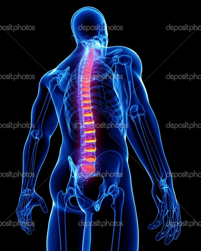 Anatomía del dolor de espalda — Fotos de Stock © pixologic #22678281