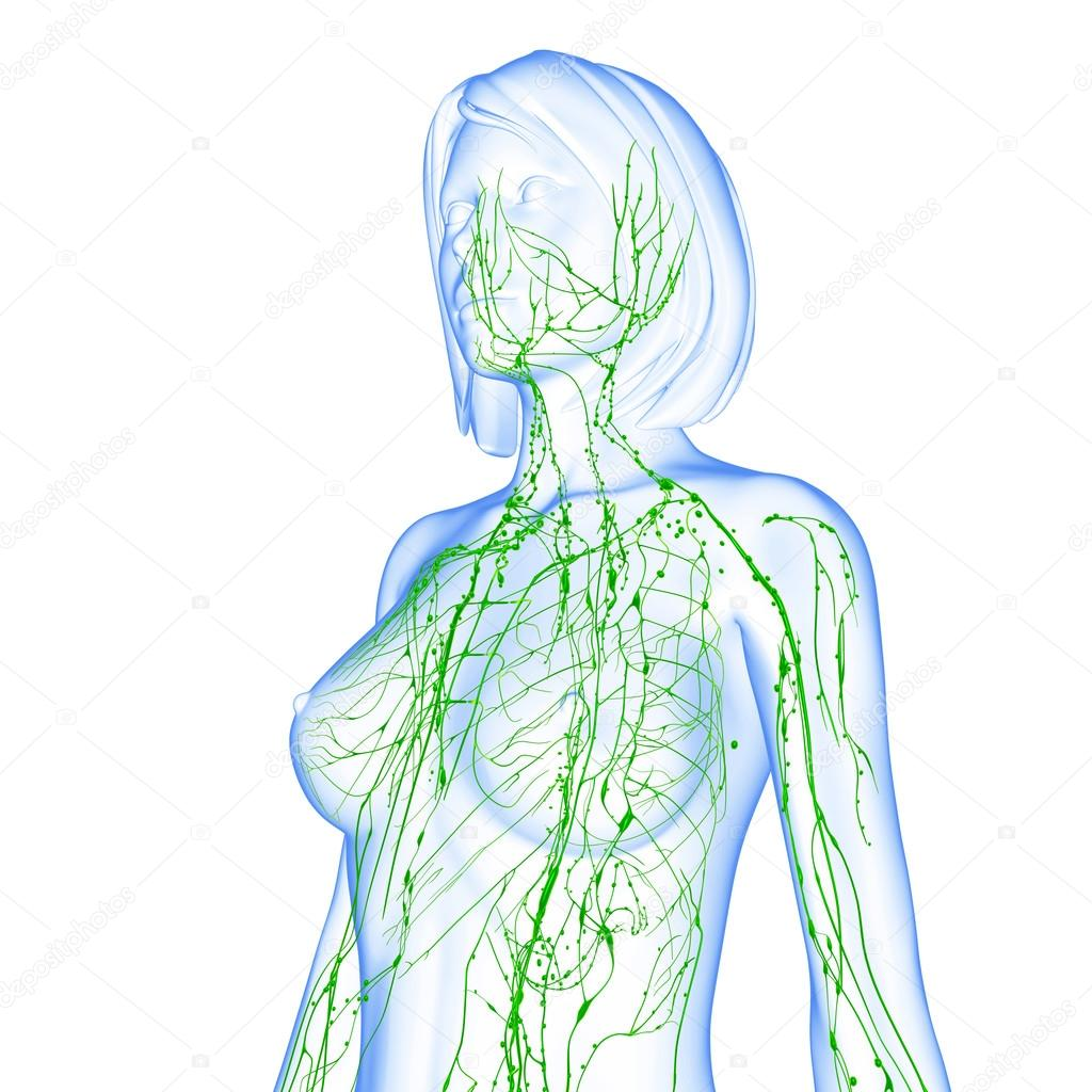 3d art illustration of lymphatic system of female — Stock Photo ...