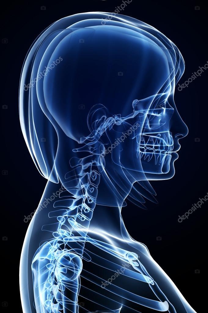 dolor de columna vertebral hembra anatomía — Fotos de Stock ...