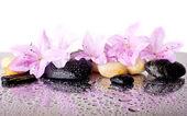 Fotografie růžové květy a černých kamenů