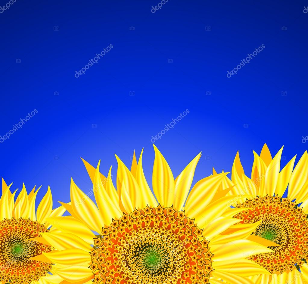 Sunflowers over blue sky