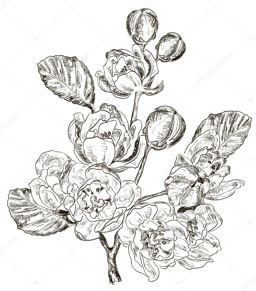 Sketch of Branch of spring flower