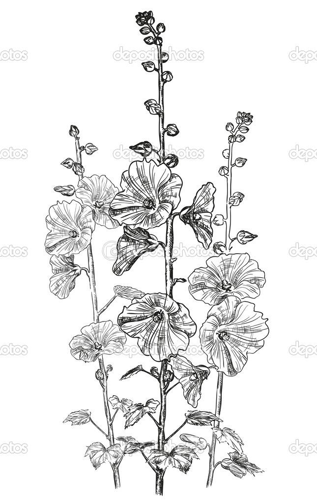 Dibujos Enredaderas Dibujo Dibujo De Flores Enredadera