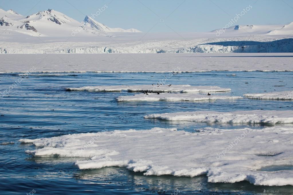 arctic #hashtag