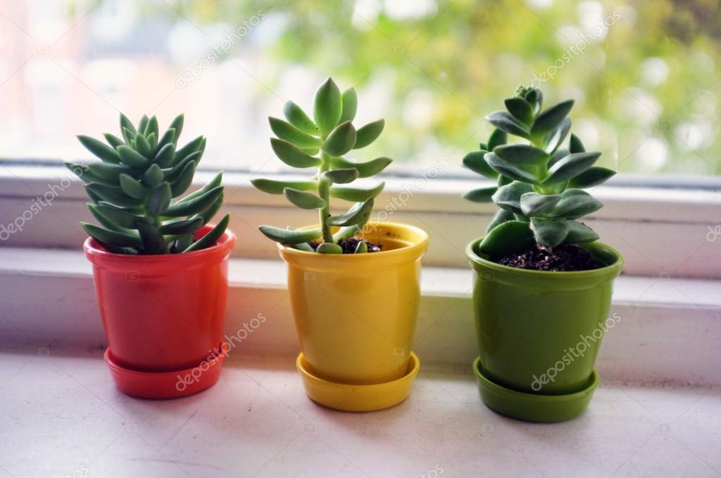 Tres peque os cactus foto de stock artistan 19521753 for Feng shui plantas dentro del hogar