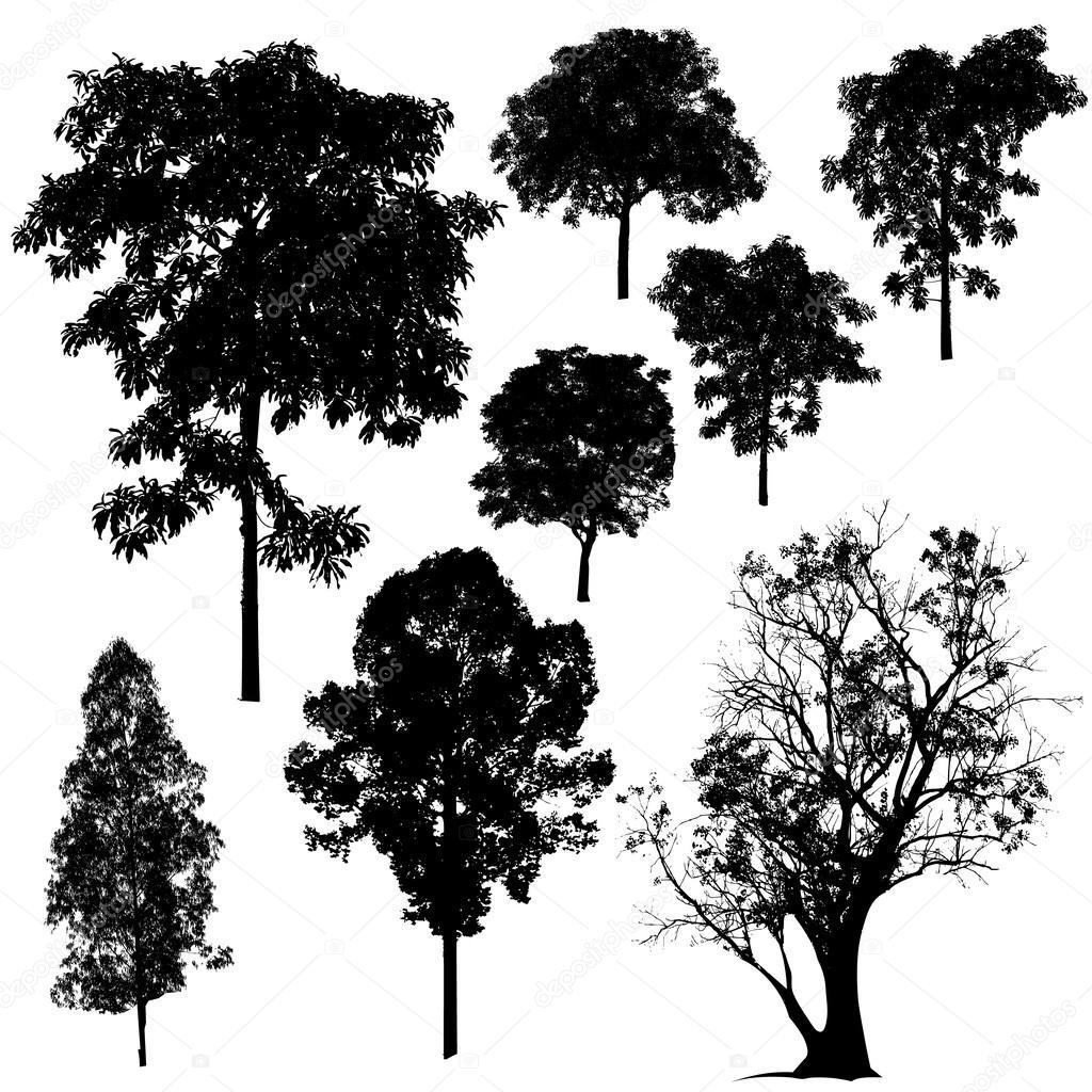Vector Illustration Tree: Stock Vector © Attaphongw #29491501
