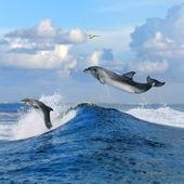 OceanView a dva delfíni zuřivec od kudrnaté vlny