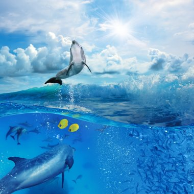 flock of dolphins underwater one flipper jumping from foamy wave