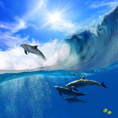 Family of happy playful dolphins one jumping from breaking wave