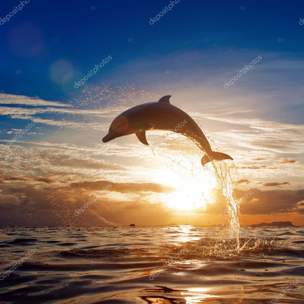 beautiful dolphin jumping from shining water