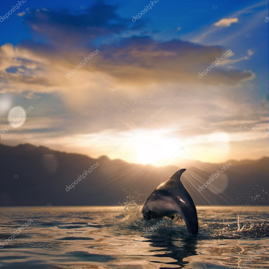 beautiful dolphin leaping out of sunset sea surface