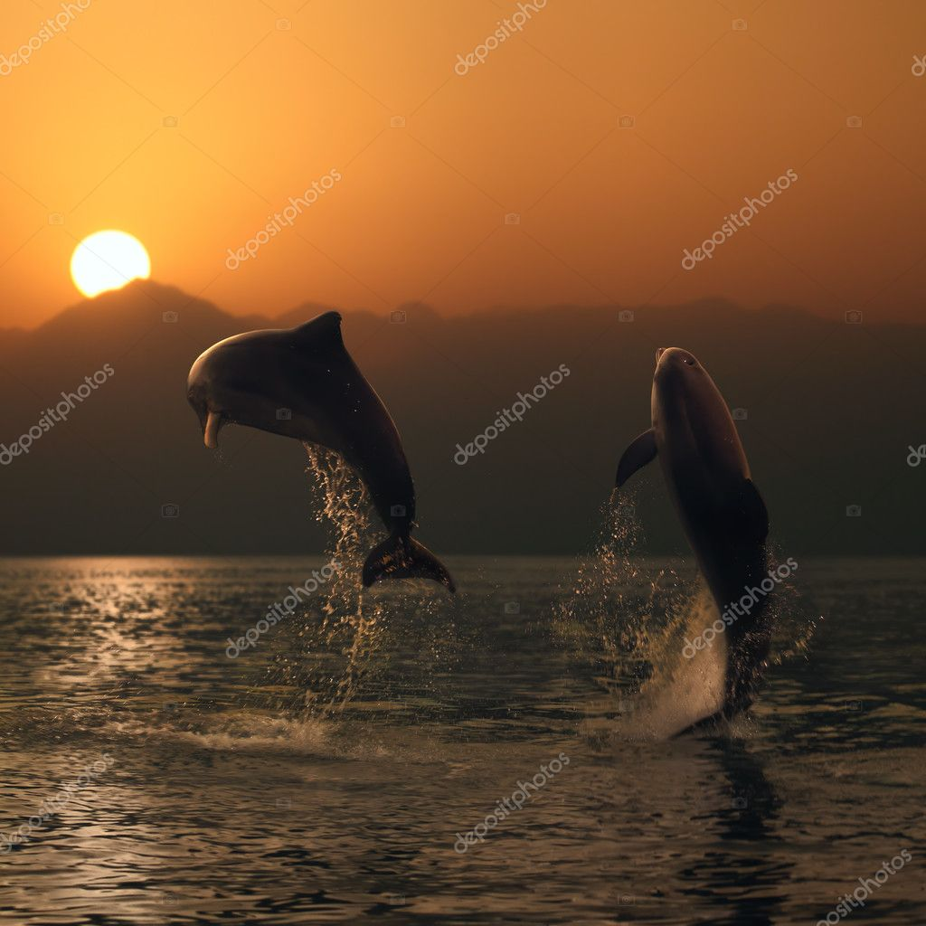 oceanview two beautiful dolphins leaping from sea