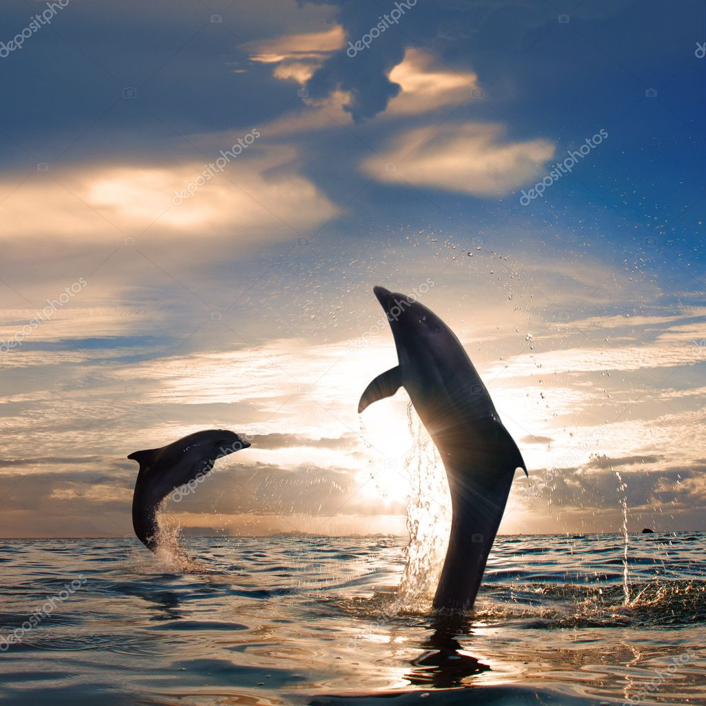 oceanview two playful dolphins leaping from sea