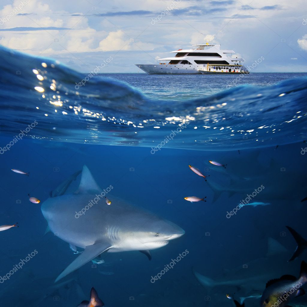 Ocean Wildlife seascape with yacht and shark