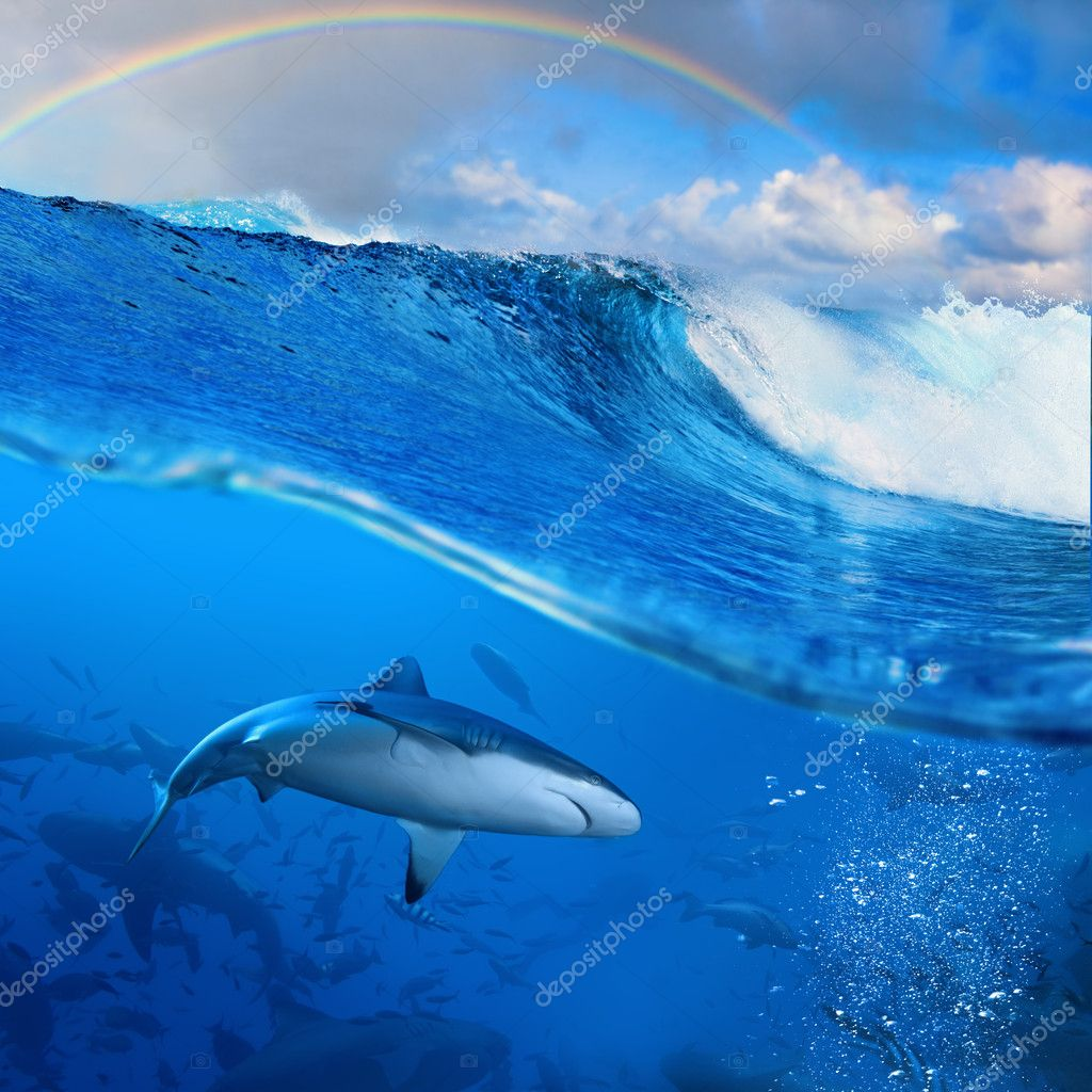 rainbow over breaking wave in sunlight and angry sharks underwat