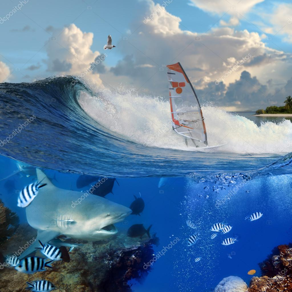 windsurfer on breaking ocean wave and wild angry shark underwate