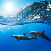 Photo two funny dolphins smiling underwater very close the camera