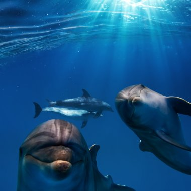 two funny nice dolphins underwater