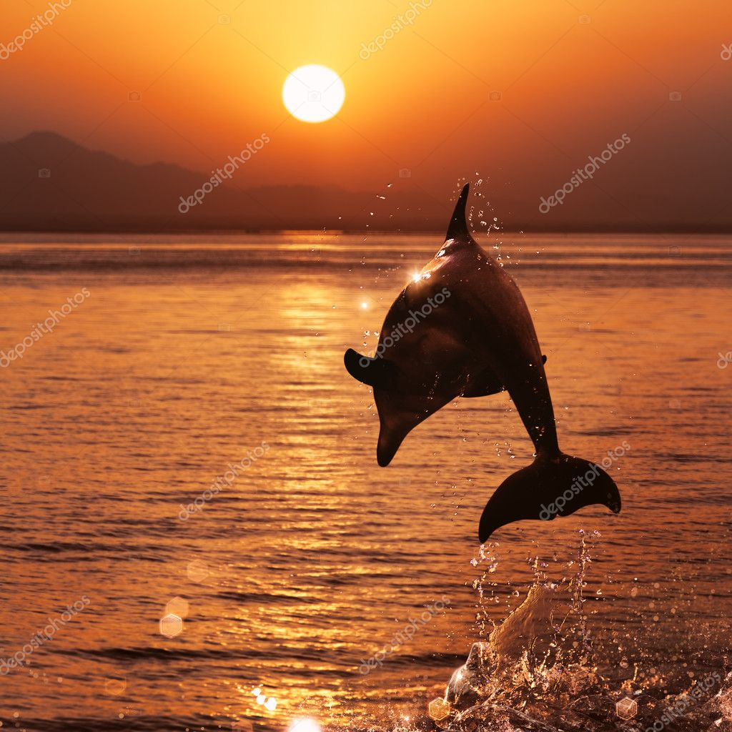 beautiful sunset and dolphin leaping out of sea surface