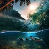 tropický ráj šablona s slunečního záření