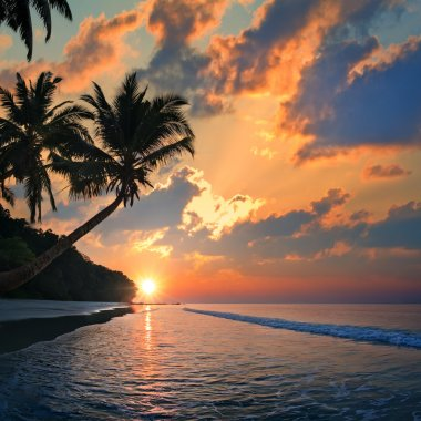 Tropical beach with palm trees at sunset time