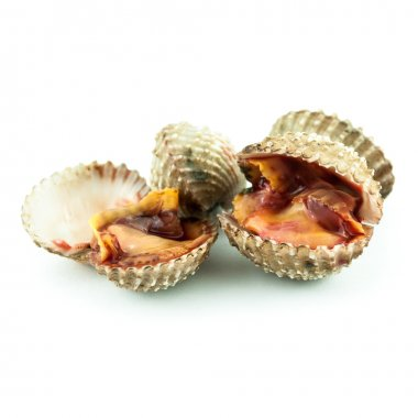 Steamed cockles - cockles isolated on white background -Fresh raw cockles