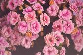 Ročník květin pozadí