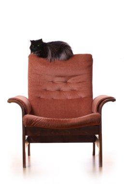 Big fat cat in on luxury armchair