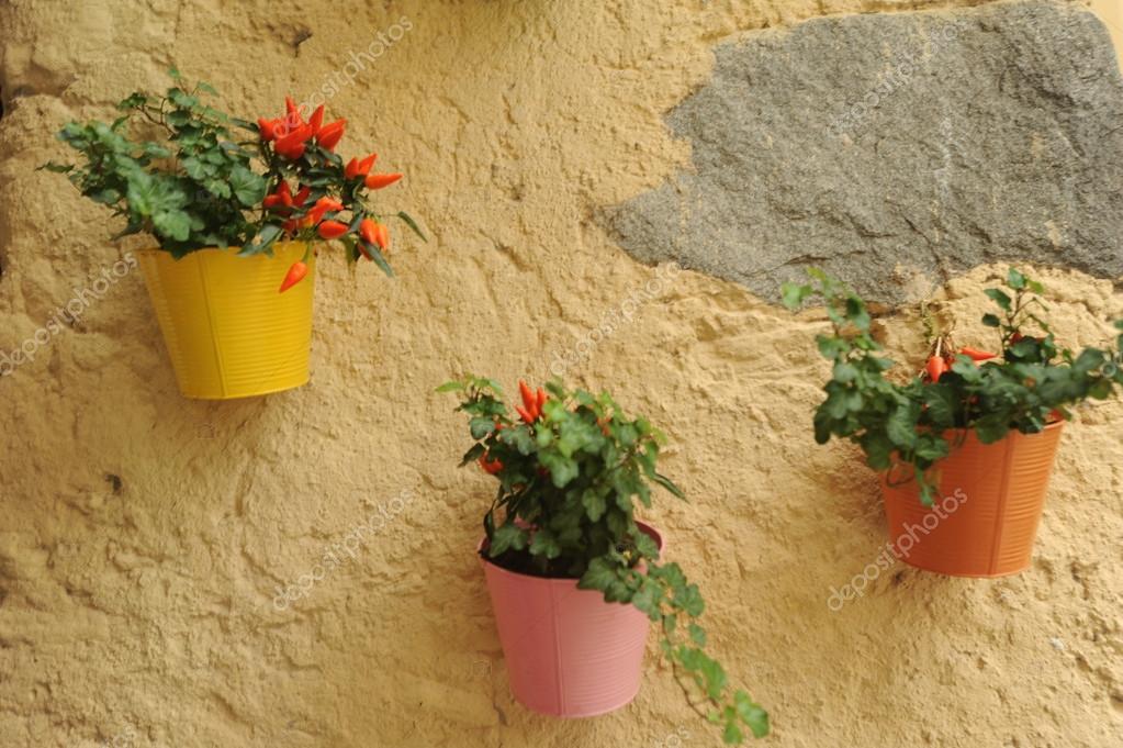 Blumentöpfe an der Wand — Stockfoto © Fotoember #32007835
