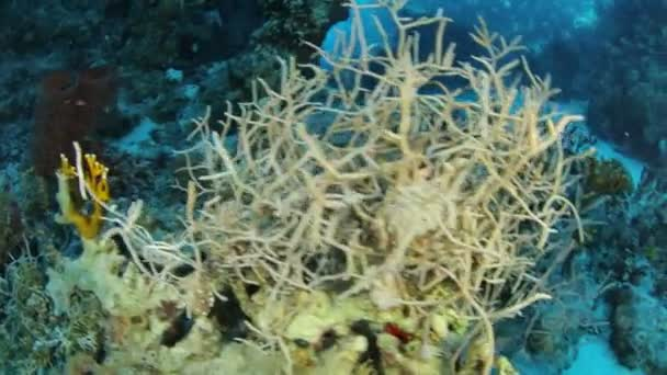 Rudé moře života pod vodou